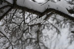 fornemmelse-for-sne